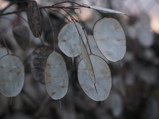 Les feuilles d'argent issues d'une même branche symbolisent la compétence qui se développe par l'expérience partagée dans le collectif de formation autogéré des cercles restaurateurs.