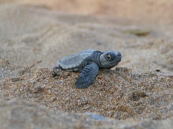 Débuter une formation en Focusing c'est un peu comme sortir sa têtes du sable.
