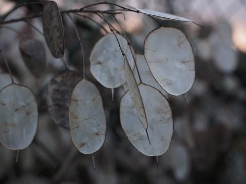 Les feuilles d'argent symbolisent la valeur créée par notre apprentissage collectif des Cercles restaurateurs