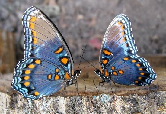 L'enseignement en individuel du Focusing: une relation où chacun déploie ses ailes.